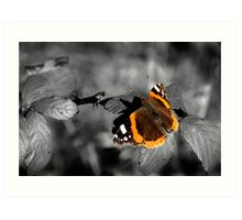 Admiral, Red Admiral Butterfly. Art Print