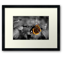 Admiral, Red Admiral Butterfly. Framed Print