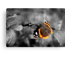 Admiral, Red Admiral Butterfly. Metal Print