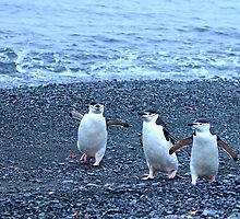 Chinstrap penguins in Antarctica,    11 by Janai-Ami