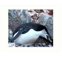 Chinstrap penguin in Antarctica,    12 Art Print