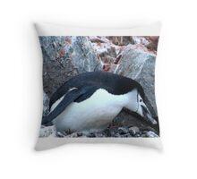 Chinstrap penguin in Antarctica,    12 Throw Pillow
