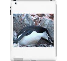 Chinstrap penguin in Antarctica,    12 iPad Case/Skin