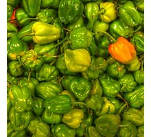 Green Scotch Bonnet Peppers Photographic Print