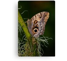Butterfly on Branch Canvas Print