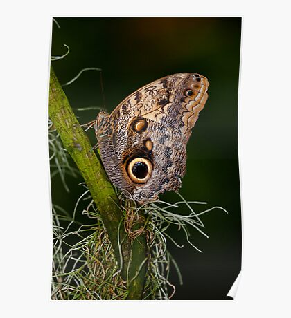 Butterfly on Branch Poster