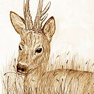 Roe Deer pencil sketch Card by sharpie