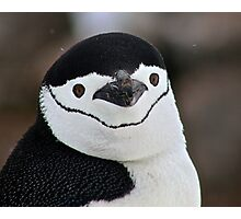 Chinstrap penguin in Antarctica,  Hollywood Headshot   18 Photographic Print