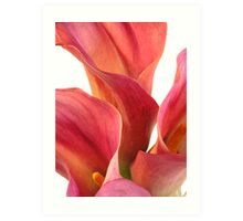 3 Calla Lillies - part 1 Art Print