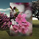 Photo in 3D by Kathy Nairn