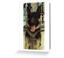 PetSmart Dogs4 Greeting Card