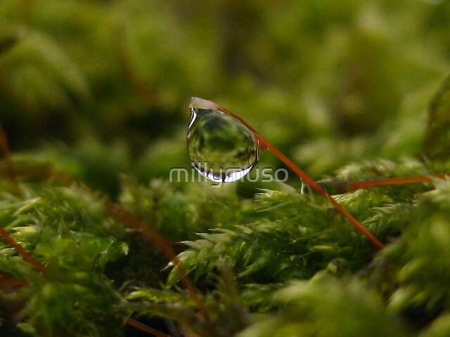 moss drops by millymuso