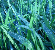 Dew on the Grass by Leyh