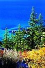 """Tahoe Autumn"" by Lynn Bawden"