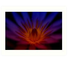 Flame of the Waterlily Art Print