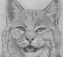 Canadian Lynx by EMBlairArtwork