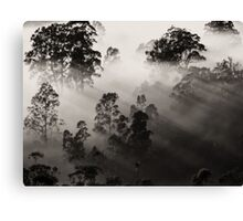'Two-Toned' Canvas Print