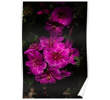 A Vivid Succulent Bouquet in Bold Pink and Fuchsia Poster