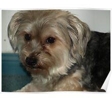 MAX MY DOG Poster