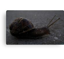 Snail Journey Canvas Print