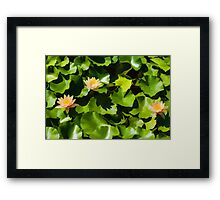 Light, Shadow and Color - Waterlily Pad Impression Framed Print