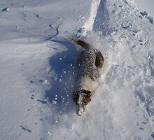 Dog emerges from snow drift by glhind