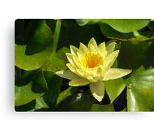 Soft Sunny Yellow - A Waterlily Impression Canvas Print