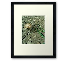 Hatched and about to Hatch. Framed Print