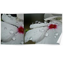Delicate Dew Drops in Diptych Poster