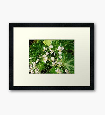 Sleeping Blossoms Framed Print