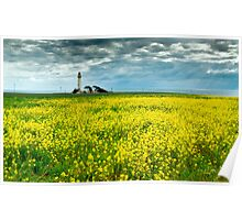 Pigeon Point Lighthouse & Mustard Field Poster