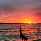 2010 Gulf Coast 2 by greg1701