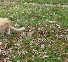 Cat Playing In The Leaves by allthingsnatura