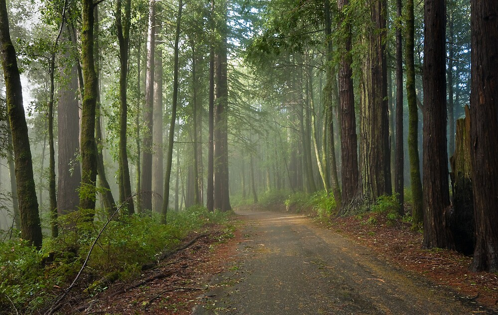 Road into Big Basin by Zane Paxton