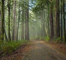 Road into Big Basin by Zane Paxton