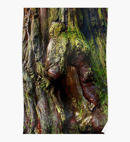 Redwood Bark Poster