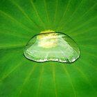 Drop of Zen by Marion  Cullen
