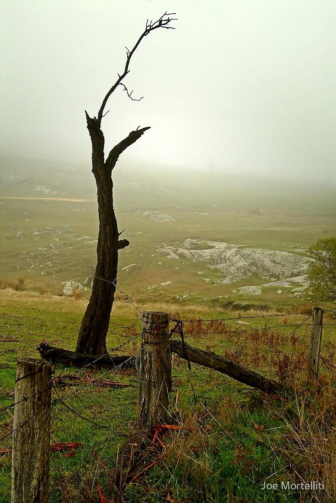 Macendon Ranges,A Damp Foggy Morning by Joe Mortelliti