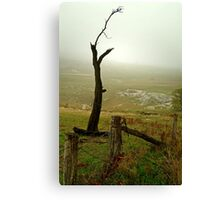 Macendon Ranges,A Damp Foggy Morning Canvas Print