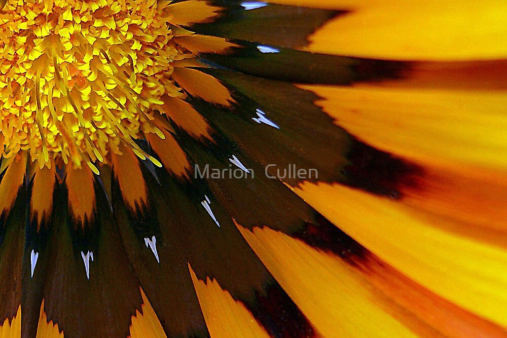 Nature's Pinwheel by Marion  Cullen