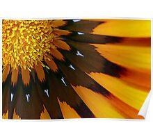 Nature's Pinwheel Poster