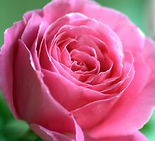 In the Pink by Beth  Wode