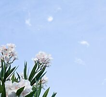 White Oleanders by MitchellT
