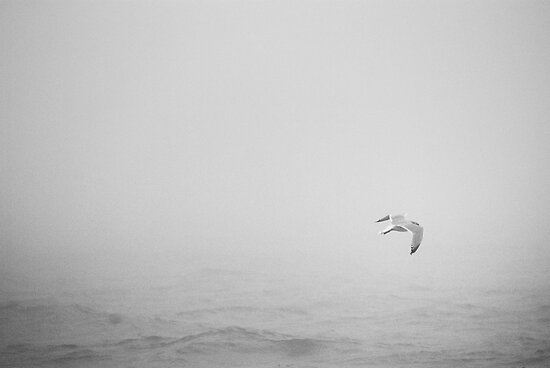 Gull, II by Mary Ann Reilly