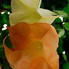 Tulip Tree by Pamela Hubbard