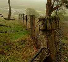 Mist and Dew by Joe Mortelliti