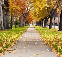 Autumn Walk Way by Phill Danze