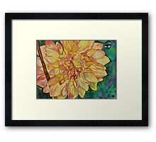 In the Dahlia patch Framed Print