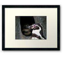 2 Penguin Framed Print