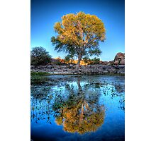 The Tree Photographic Print